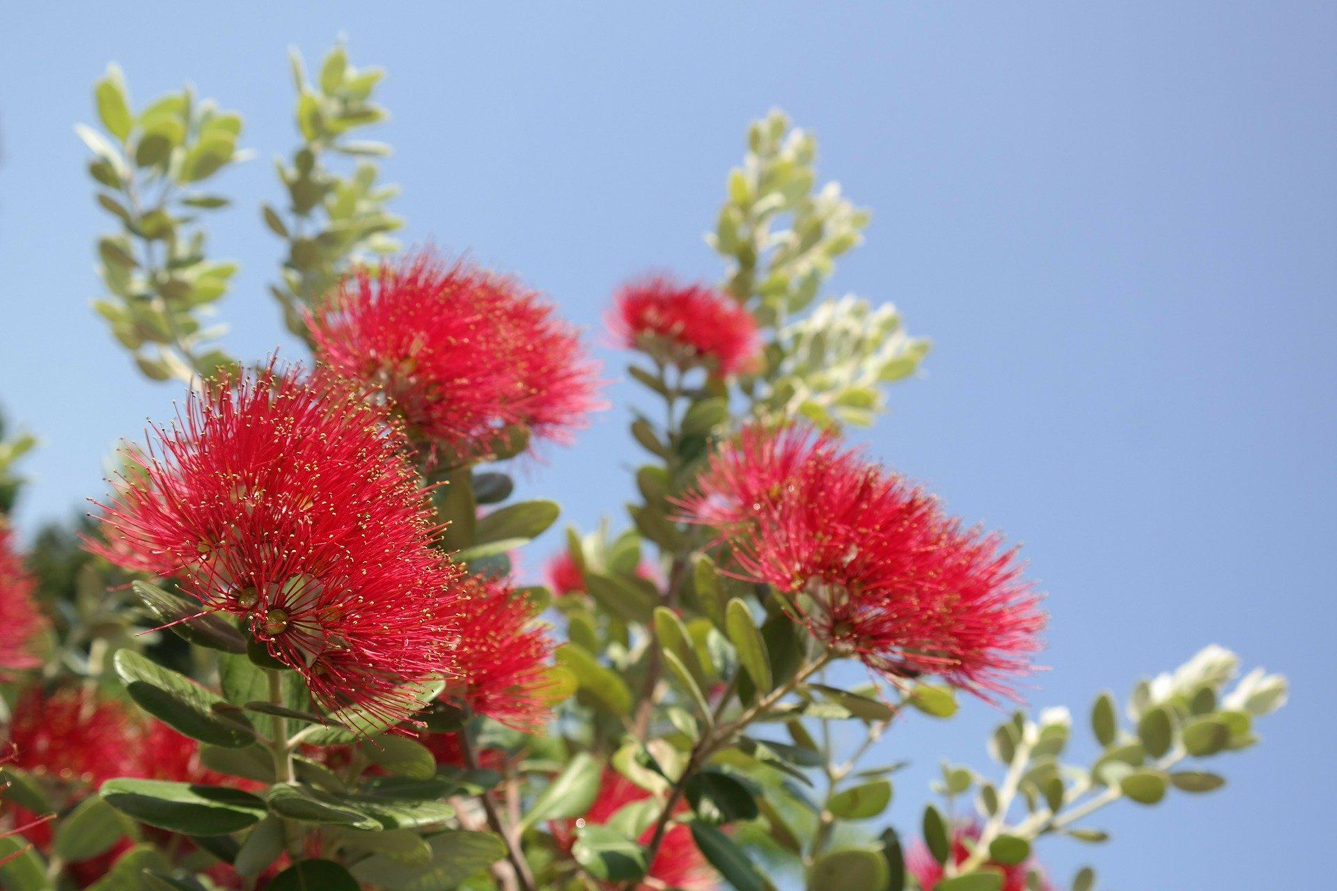 blossom-141639_1920